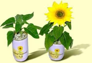 Flori conserva floarea soarelui