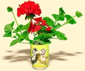 Flori conserva muscata