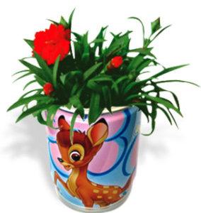 Flori conserva promotionale