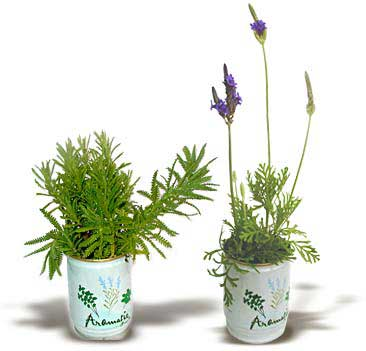 Flori conserva