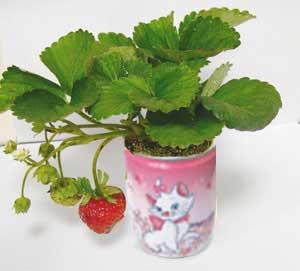 Legume fructe conserva promotionale