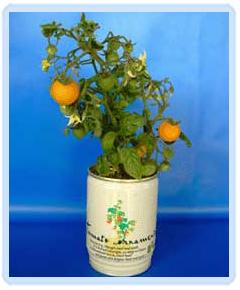 Plante logo imprimat